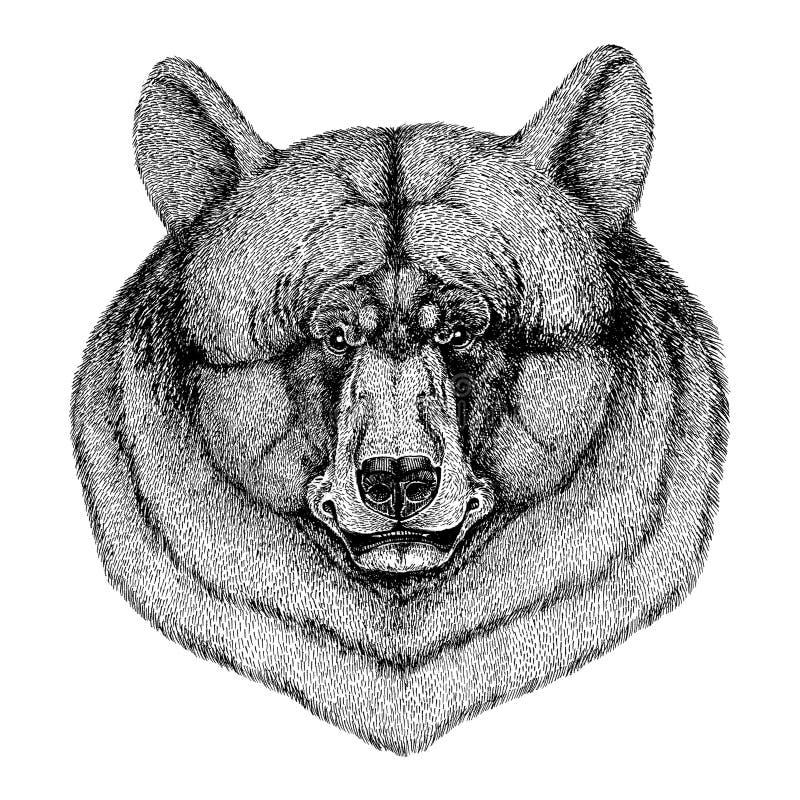 Kühles und modernes schwarzer Bär Weinleseart Stich-Bild für Tätowierung, Logo, Emblem, Ausweisdesign vektor abbildung