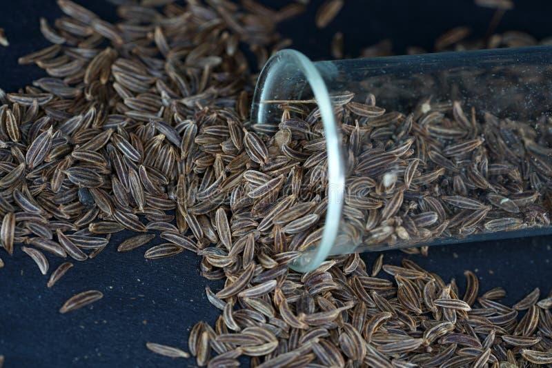 Kümmel sind ein klassisches Gewürz schwer verdaulich in den Nahrungsmitteln, wie Kohltellern lizenzfreie stockbilder