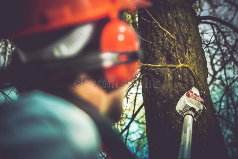 Kümmern von  um Bäumen lizenzfreies stockbild