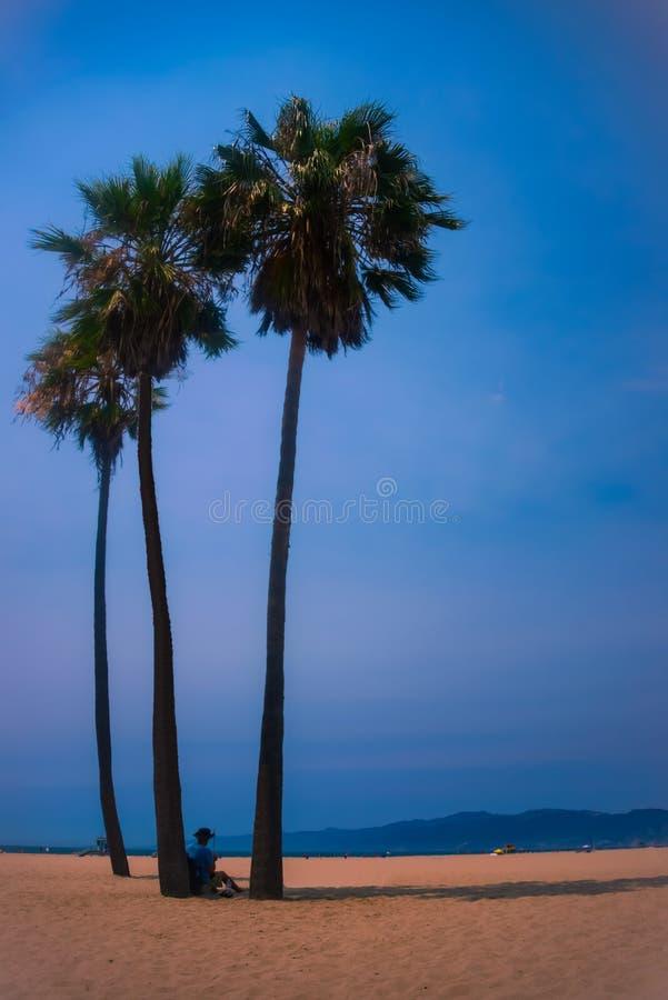 Künstler unter einer Palme auf Santa Monica Beach stockbilder