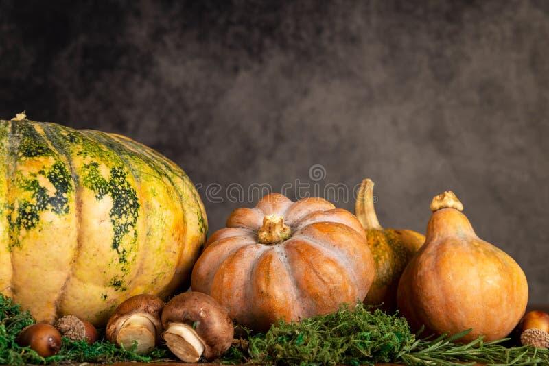 Künstlerische Saisonnahaufnahme des Kürbises und des Butternut mit einem Weinlesehintergrund- und -kopienraum stockfotografie