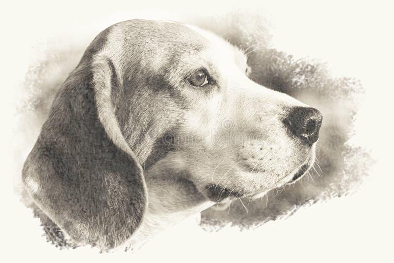 Künstlerischer etwas Sepia getontes Bild eines Spürhundhundekopfes stockbilder