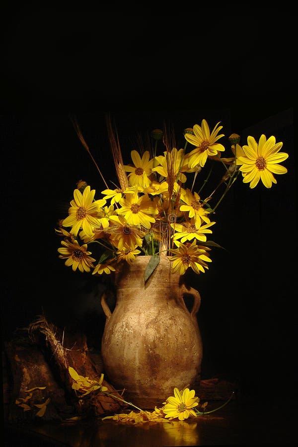 künstlerisches gelbes Gänseblümchen   stockbild
