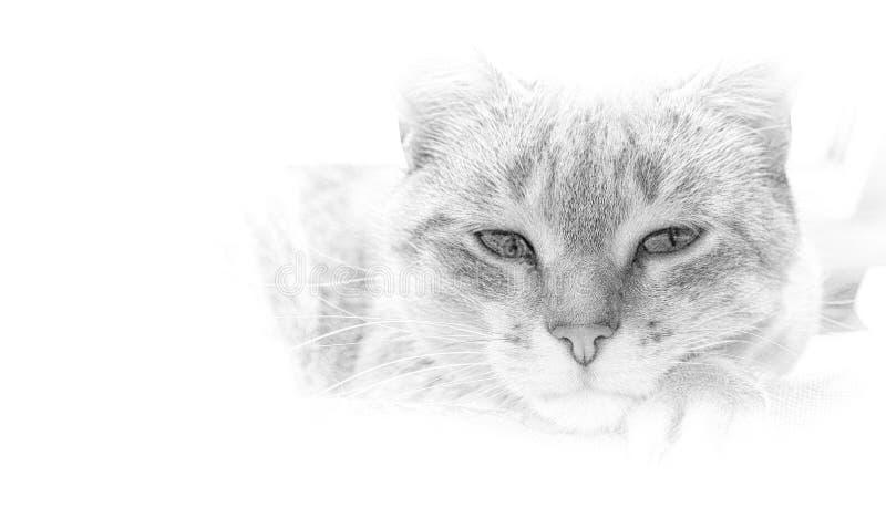 Künstlerisches Schwarzweiss-Bild einer Katze stockbild