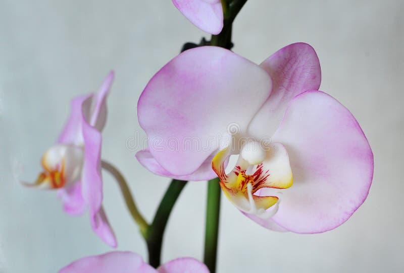 Künstliche Blumen, Phalaenopsis stockbild