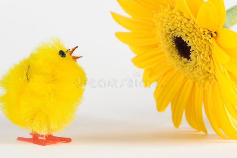 Künstliches Huhn und gelber Gerbera stockbild