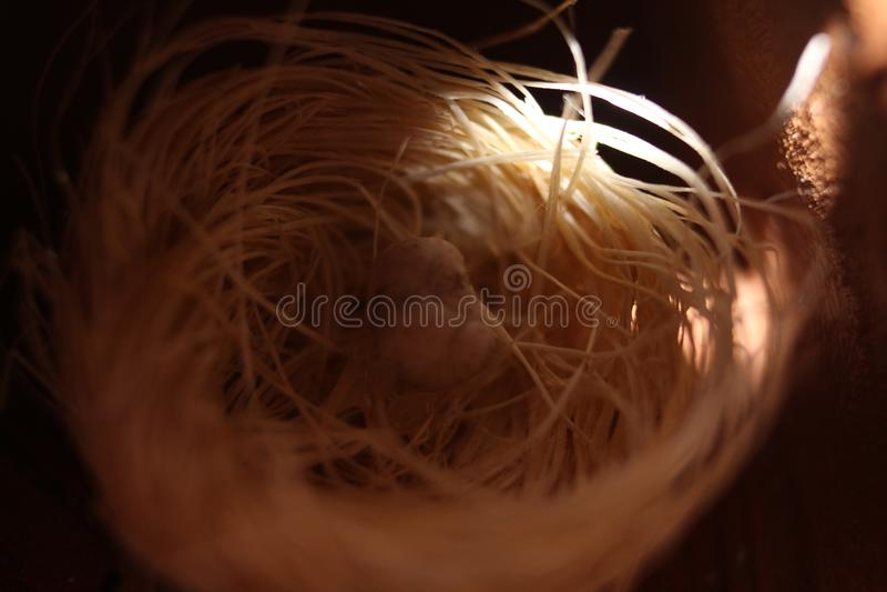 Künstliches Nest- und Eimodell des Tucano-Vogels stockbild