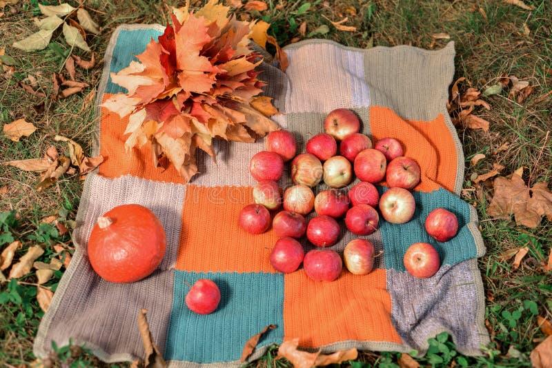 Kürbis, Äpfel und Gelbe, Rotahornblätter liegen auf farbiger Bettdecke auf dem Gras stockfotos