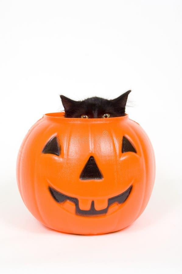 Kürbis der schwarzen Katze und des Plastiks - Halloween stockbild