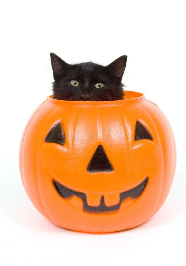 Kürbis der schwarzen Katze und des Plastiks - Halloween stockfoto