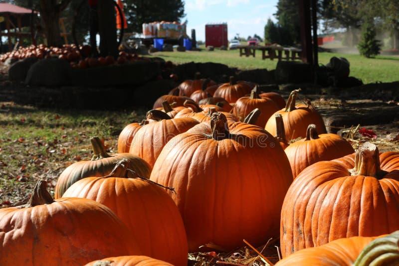 Kürbis-Flecken im Herbst lizenzfreie stockbilder