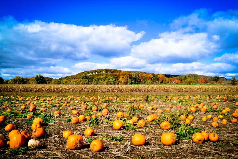 Kürbis-Flecken während des Herbstes lizenzfreies stockbild