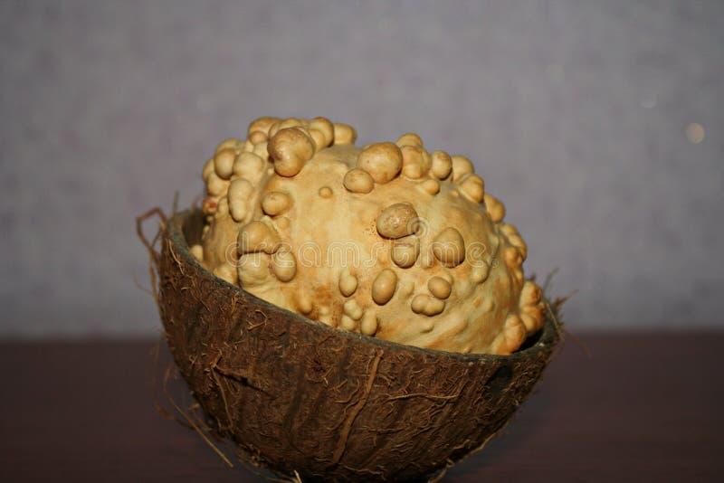 Kürbis (Grad Lagenaria) liegt in einer Kokosschale lizenzfreies stockbild