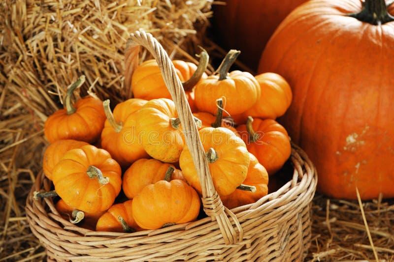 Kürbis im Korb und auf dem Heu, Herbstdekoration für Danksagung stockfotografie