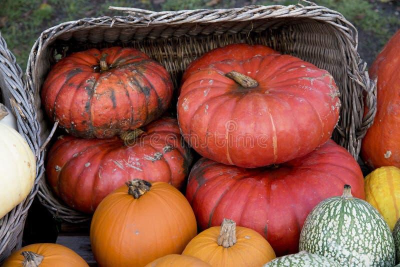 Kürbis, Zucchini, Kürbisanlagen lizenzfreie stockbilder