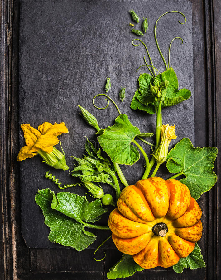 Kürbis Zusammensetzung mit Stämmen, Blättern, Blumen und kleinen Früchten auf dunklem Hintergrund lizenzfreies stockbild