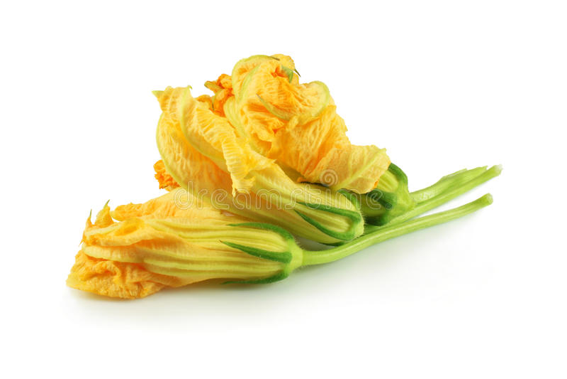 Kürbisblumen stockfoto
