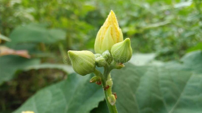 Kürbisblumennahrungsmittel stockfotografie