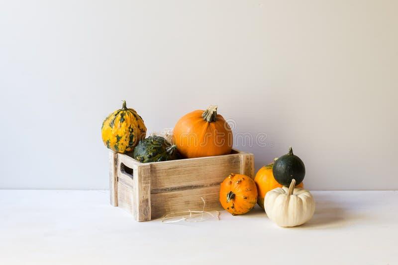 Kürbisdekoration für Halloween, bunte dekorative Kürbise, Kürbisse, Herbst, Ernte, horizontal, mit Kopienraum stockbilder