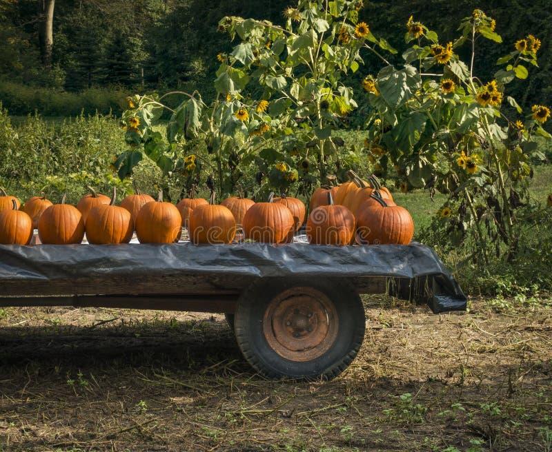 Kürbise auf einem Bauernhof-Lastwagen stockfoto