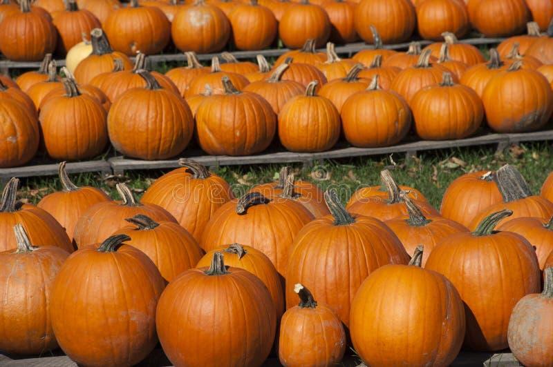 Kürbise bewirtschaften, Nahrung, Halloween-Kürbis-Fall-Herbst stockfoto