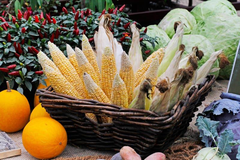 Kürbise, Kohl, glühender Pfeffer in den Töpfen und neue rohe Köpfe von Mais in einem Weidenkorb stockfoto