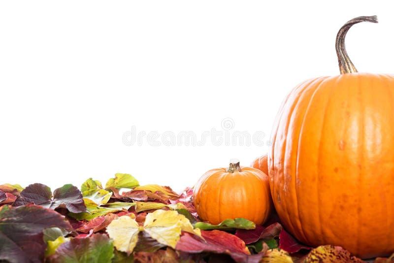 Kürbise und Blätter lizenzfreie stockfotos