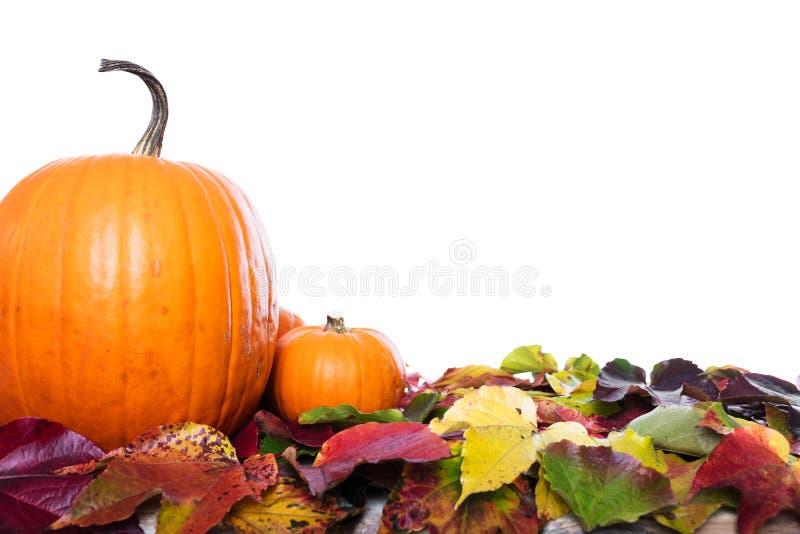 Kürbise und Blätter stockfotos