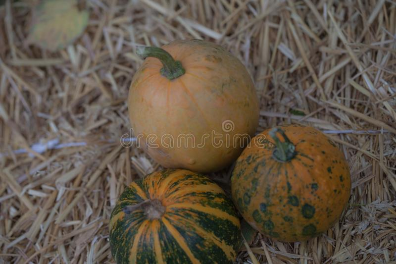 Kürbissammlung auf Heu Herbsternte Fall-Dekorations-, Herbstfeier-, Postkarten- und Plakathintergrund stockfoto