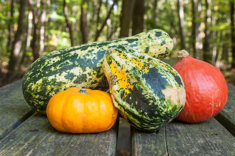 Kürbisse für Halloween-Dekoration lizenzfreies stockfoto
