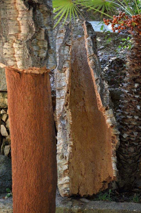 Kürzlich geerntete Barke des Korkenbaums - Eichenkorkeiche lizenzfreie stockfotos