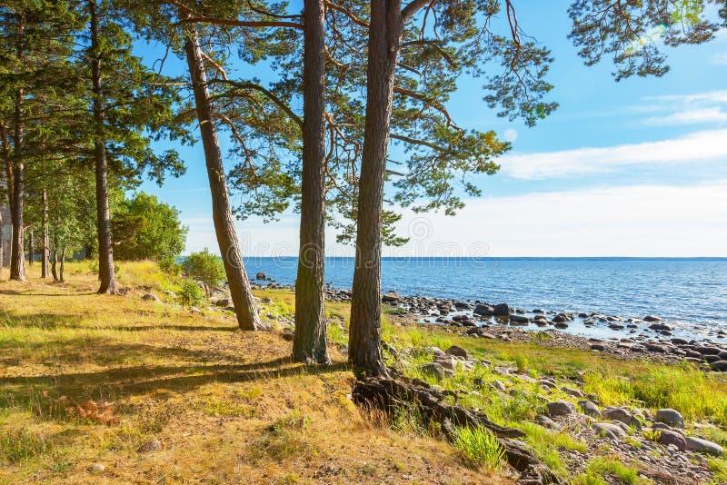 Küste von Ostsee Estland lizenzfreie stockfotografie