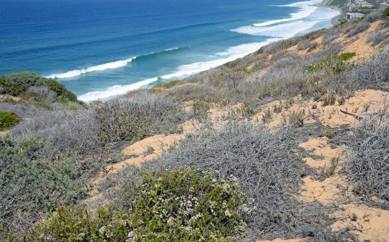 Küsten-Sage Community im Dana Point Headlands Conservations-Bereich stockbild