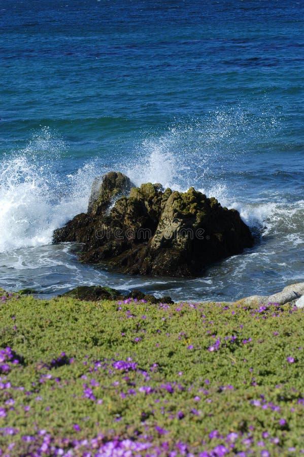 Download Küstenblumen stockfoto. Bild von pazifisch, spritzen, wellen - 32326