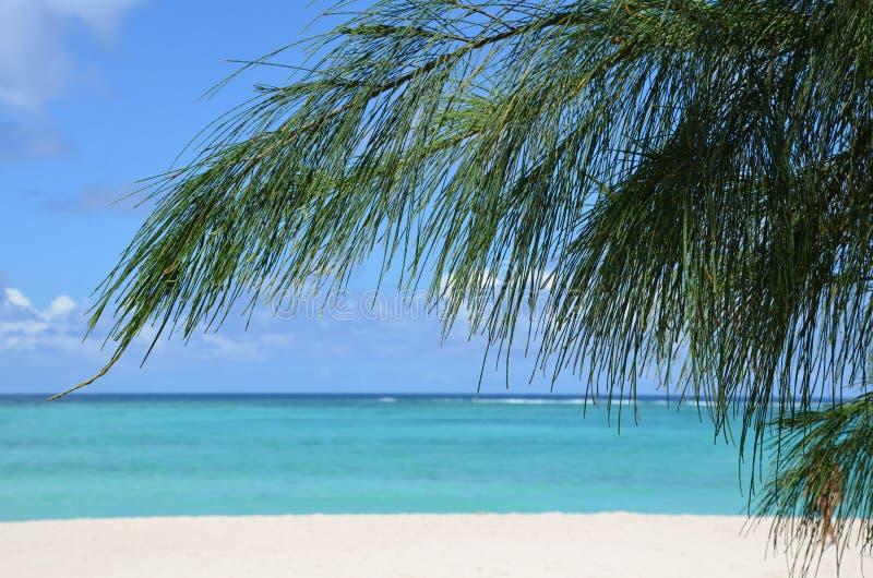 Küstenlandschaft mit Sand, Ozean und australischer Kiefer lizenzfreie stockbilder