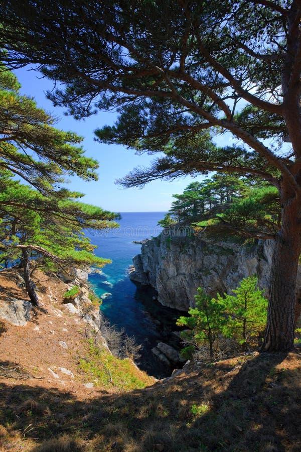 Küstenliniebäume 20 lizenzfreie stockbilder