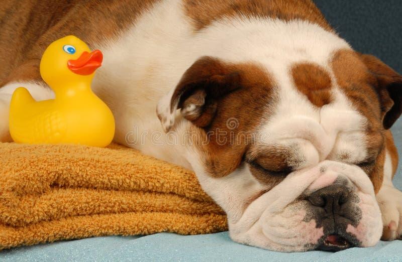 kąpielowy psi czas obraz stock