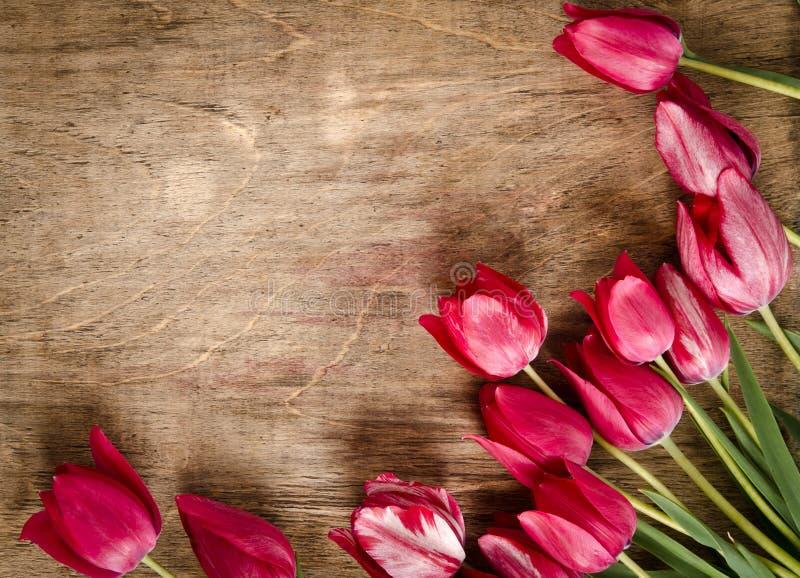 Kąt od świeżych tulipanów obraz royalty free