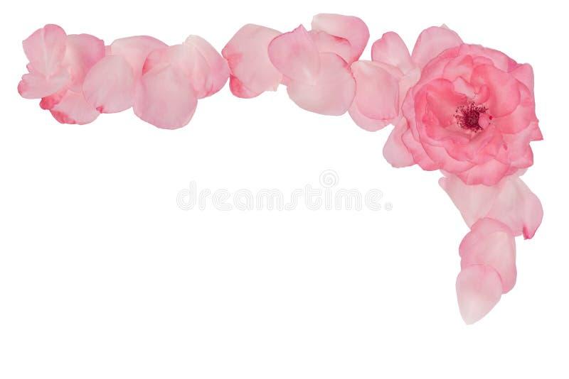 Kąt od różowych płatków Rama dla fotografii Dekoracyjny nagłówek fotografia royalty free