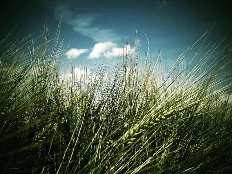 kąta pola trawy lato widok szeroki zdjęcie stock