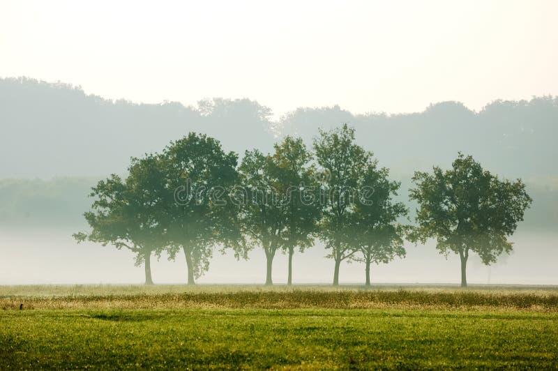 kęp drzewa fotografia stock