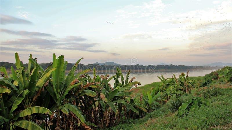 Kępa banan z panorama widokiem obrazy stock