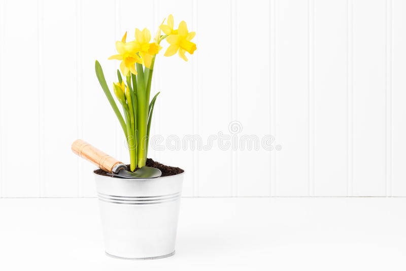 Kępa daffodils obrazy stock