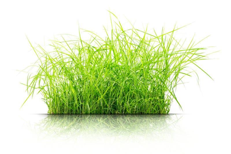 Kępa odizolowywająca trawa obraz stock