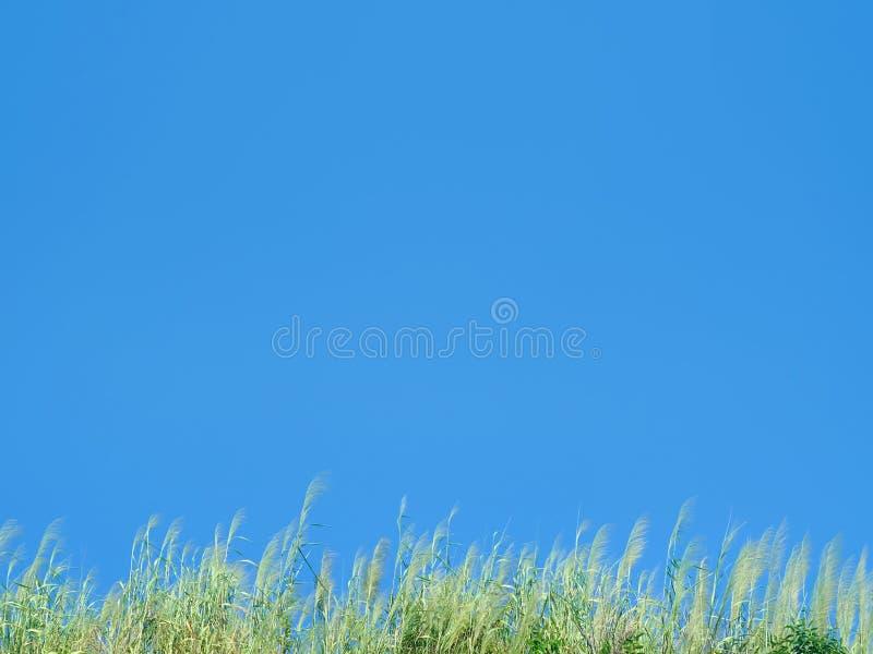 Kępa trawa zdjęcie stock