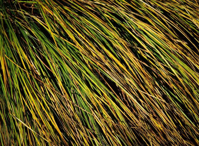 Kępa trawy tekstura obraz stock