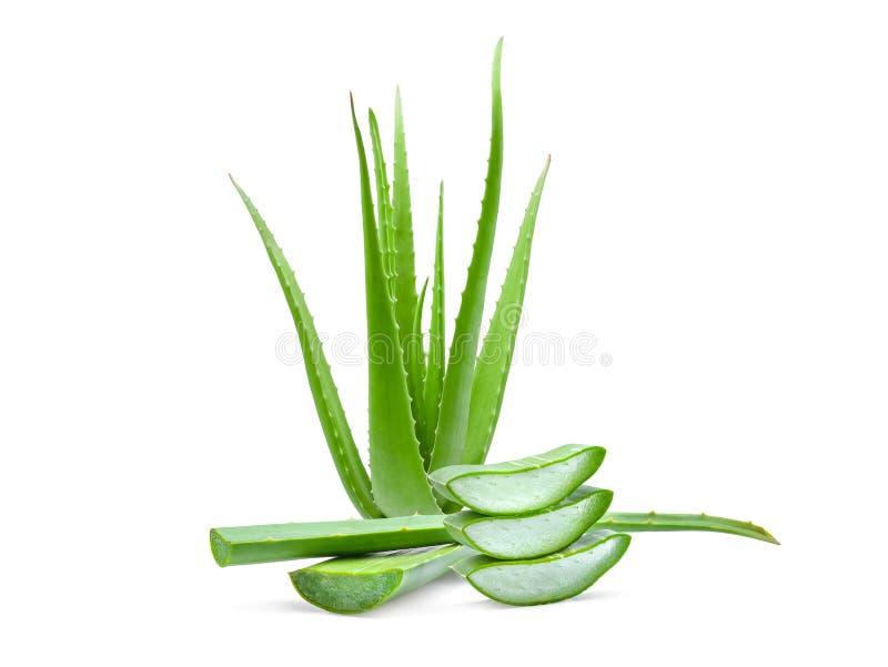 Kępa zielona aloesu Vera roślina odizolowywająca na bielu obrazy royalty free