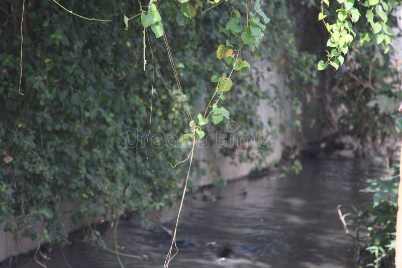 Kępka pełzacze wiesza w dół kanalizacyjnego kanał Ja amzing jak natura it& x27; s równowaga fotografia royalty free