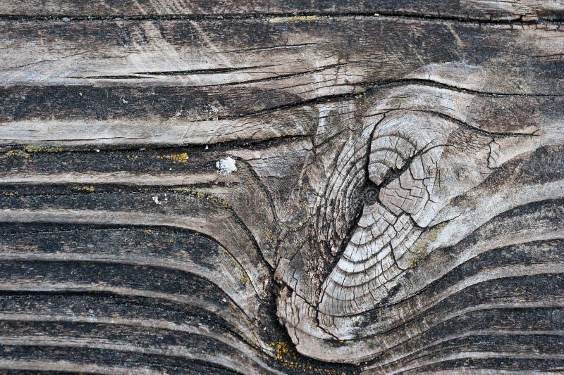 kępki zbożowy drewno obrazy stock