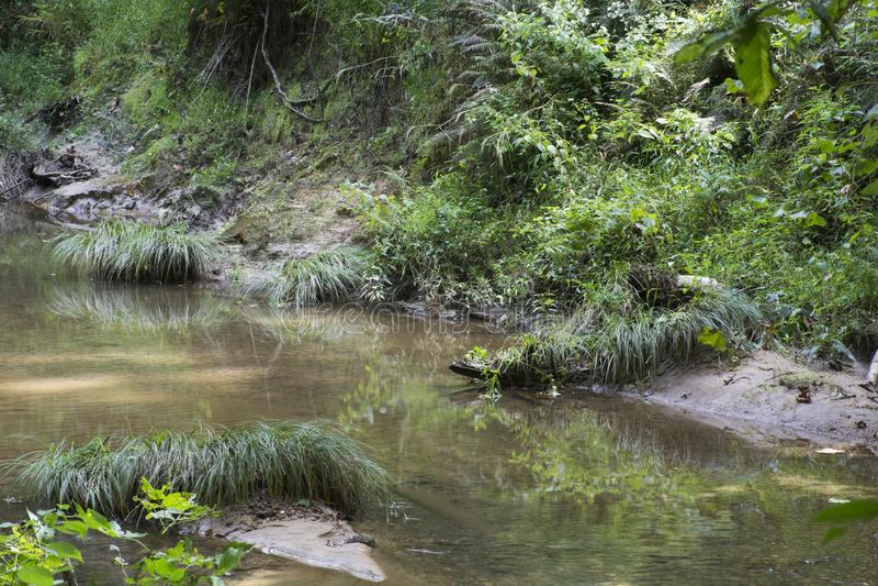 Kępy trawa w zatoczce zdjęcie royalty free